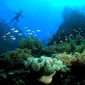 Bunaken in Indonesia